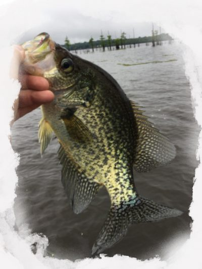 Crappie Fishing Tips and techniques